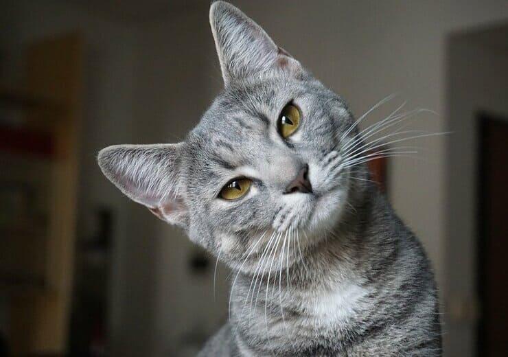 猫のお世話内容について
